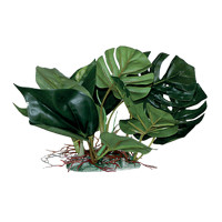 Blu Bios Pianta decorativa Anubias cm 20