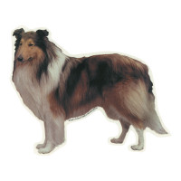 Camon Vetrofania Collie