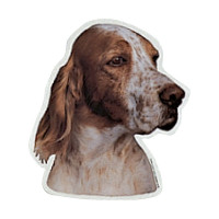Camon Vetrofanie english setter